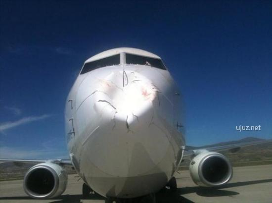 Kuş sürüsüne çarpmış uçak burnu