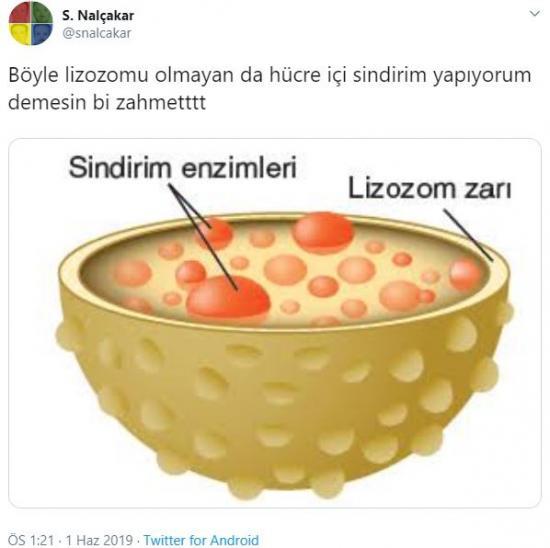 Böyle lizozomu olmayan da hücre içi sindirimi yapıyorum demesin bir zahmet.