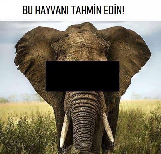 Bu hayvanı tahmin edin! Sizce ne?