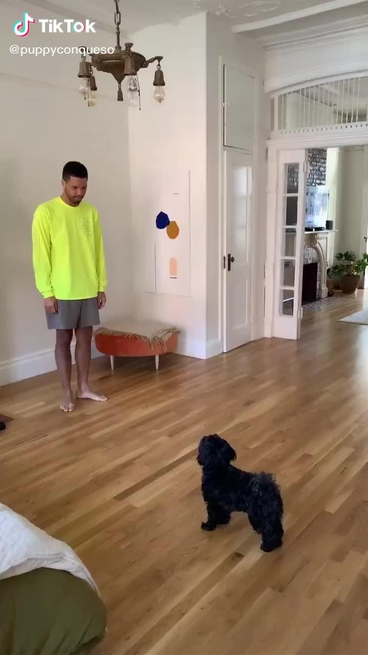 Köpeğin Paytaklığı - Patatak